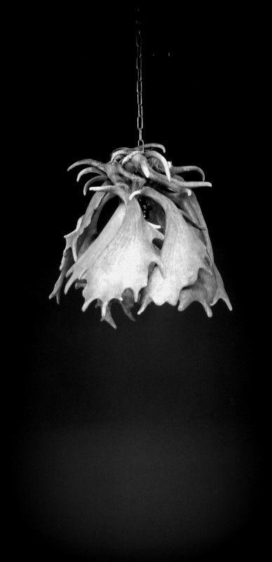 Nieuw in ons assortiment. Hanglamp van damhert gewei, welke ook als plafoniere gebruikt kan worden. Deze geweilamp is gemaakt van een groot aantal geweien.