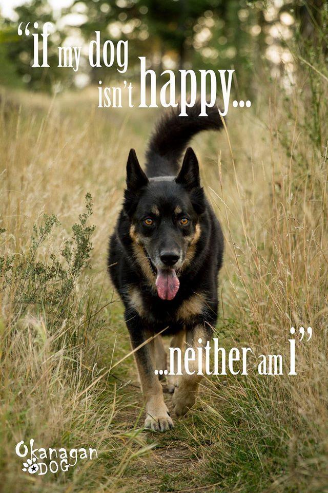 If my dog isn't happy, neither am I