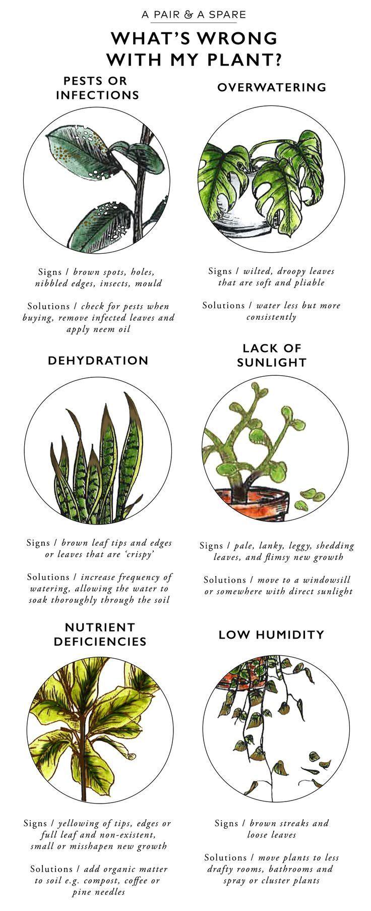 Handig om te weten: wat is er mis met mijn plant? Een handleiding die je precies vertelt hoe je verschillende 'plant problemen' herkent; uitdroging, gebrek aan zonlicht of lage vochtgraad.