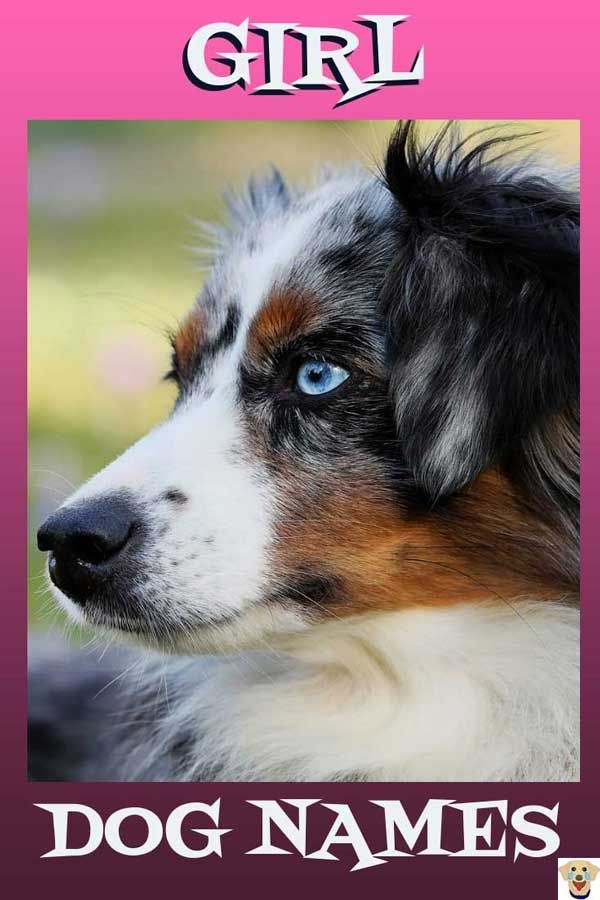 Female Dog Names And Meanings Girl Dog Names Puppy Names Female Dog Names