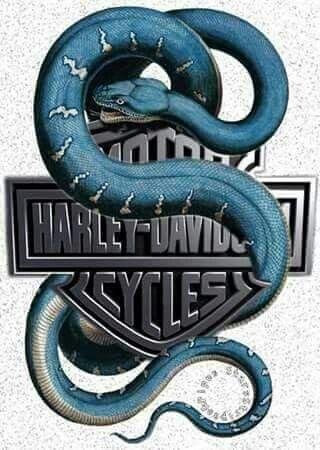 Attirant Harley Davidson Logo, Motorcycle Wallpaper, Hells Angels, Tee Shirts, Jay,  Hygge, Choppers, Motorcycles, Snakes