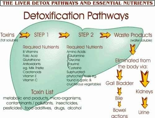 The Liver Detox Pathways and Essential Nutrients ...  Nice chart showing what we need and why.  from Nature's Sunshine