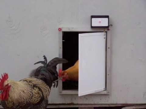 Pullet-Shut Automatic Chicken Coop Door Morning Opening $250.00 & 113 best chicken coop door images on Pinterest | Chicken coops ... Pezcame.Com