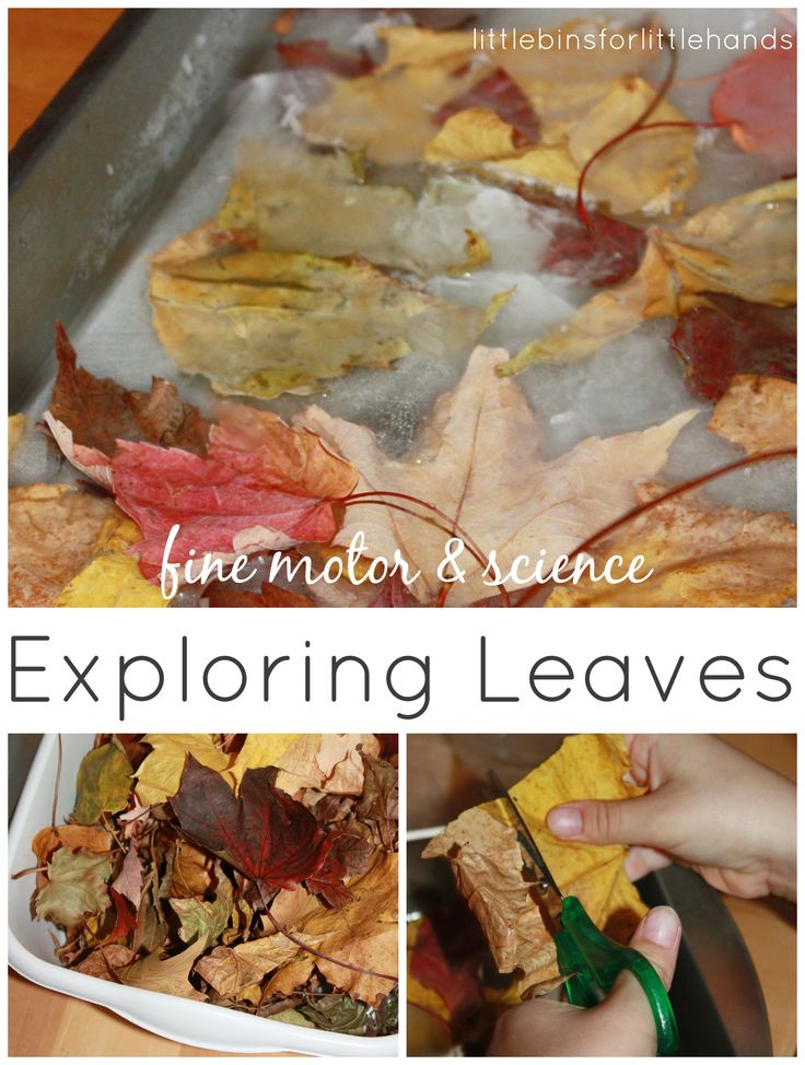 // _ // ]]> // Leaf Activities Fine Motor Science Play Simple leaf activities to explore Fall! I still want to celebrate Fall as long as I can before the cold of Winter settles in soon! These simple leaf activities came about from outdoor leaf pile play. Why not bring a small sensory bin of ...
