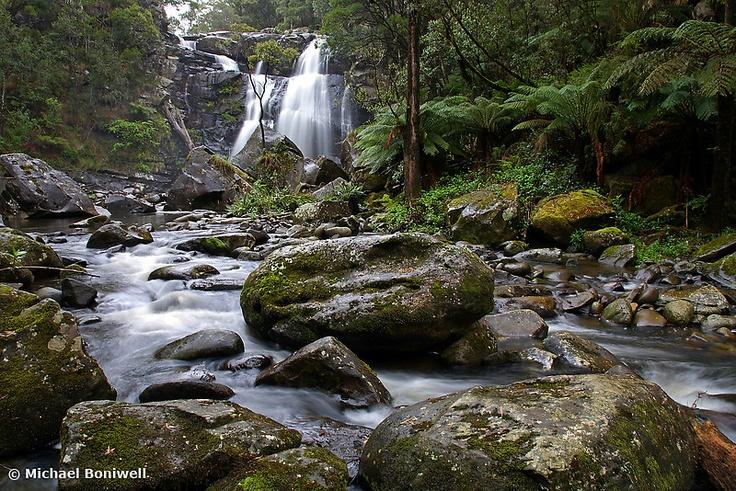 stevensons falls, otways national park: 3hrs travel plus 20mins-1hr walk