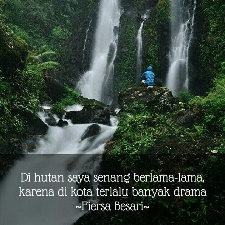 Kata Kata Bijak Tentang Alam Hutan