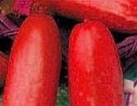 Kırmızı salatalık tohumları Meyve Sebze Tohumları Ücretsiz Kargo çiçek saksıları yetiştiricilerinin 100 tohumlar/çanta