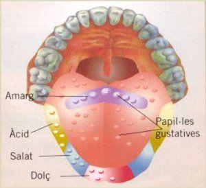 El sistema nerviós