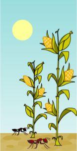Fábulas y leyendas: La leyenda del maiz