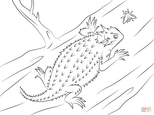 Texas Horned Lizard Coloring Pages Frog coloring pages