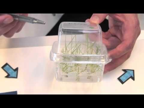 Forskerinterview om genmodifikation af planter