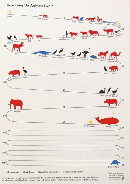 Which lives longer, a Chicken or a Cat? Assuming that the chicken and cat are not living together, you may be surprised to learn which one has the longer lifespan. Find the answer on this very cool animal longevity chart by Otto and Marie Neurath, who pioneered the International System of Typographic Picture Education. (ISOTYPE). Sorry the pin cuts off the bottom part of the chart with the Turtle at 150.