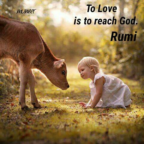 To Love is to reach God. ~ Rumi
