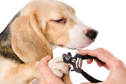 Les 47 meilleures images du tableau animaux sur pinterest - Comment couper les griffes de son chien ...
