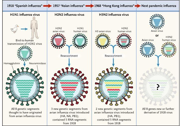 Circulating Avian Influenza Viruses Closely Related to the 1918 Virus Have Pandemic Potential