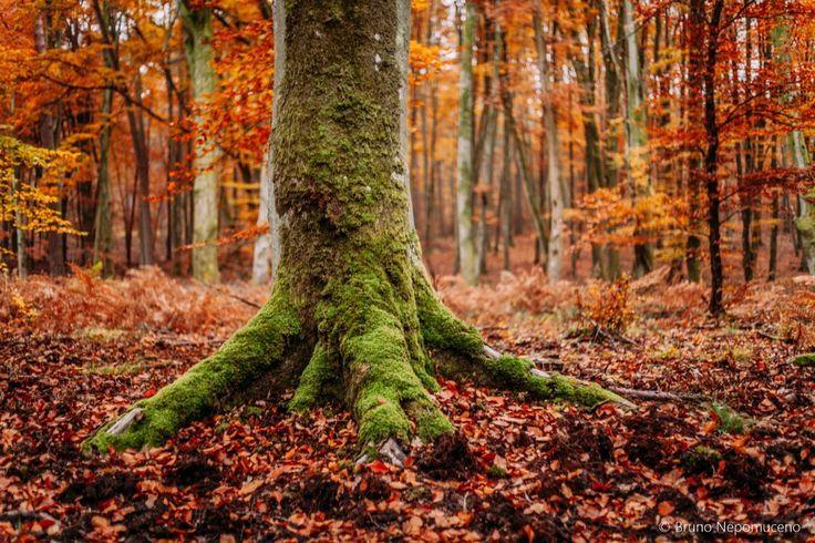 Colores del otoño para disfrutar en Francia