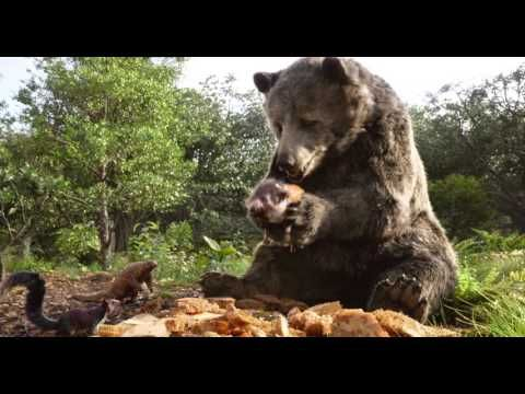 The Jungle Book 2016 - The Bare Necessities Theme Soundtrack (OST) - YouTube