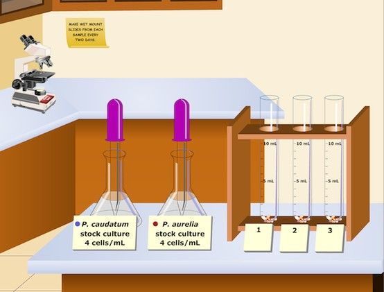 Virtual Lab: Population Biology - How does competition ...