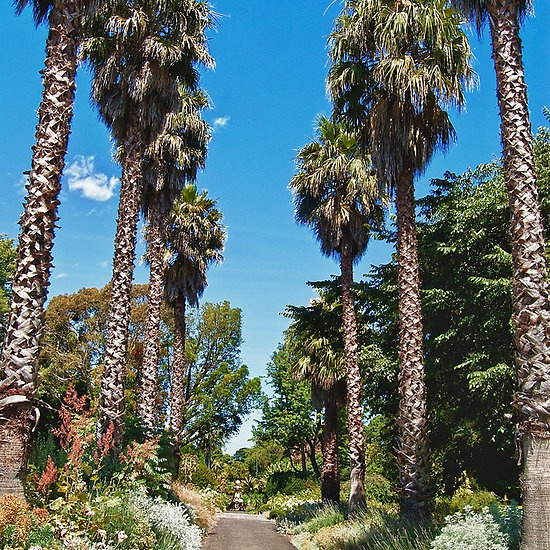 Avenue, Geelong Botanic Gardens