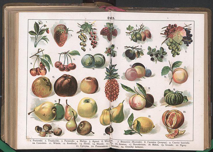 owoce.jpg (3940×2806)