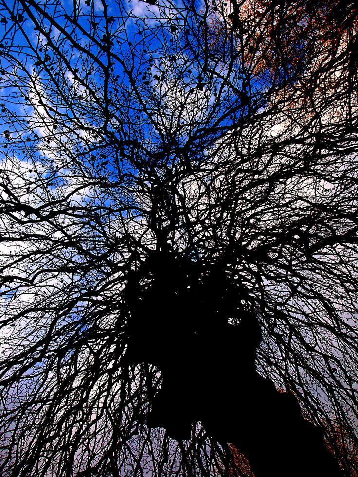 ELECTRIC TREE  By Diagne N'dèye      Arboretum, domaine départemental de la Vallée-aux-Loups...Hauts-de-Seine