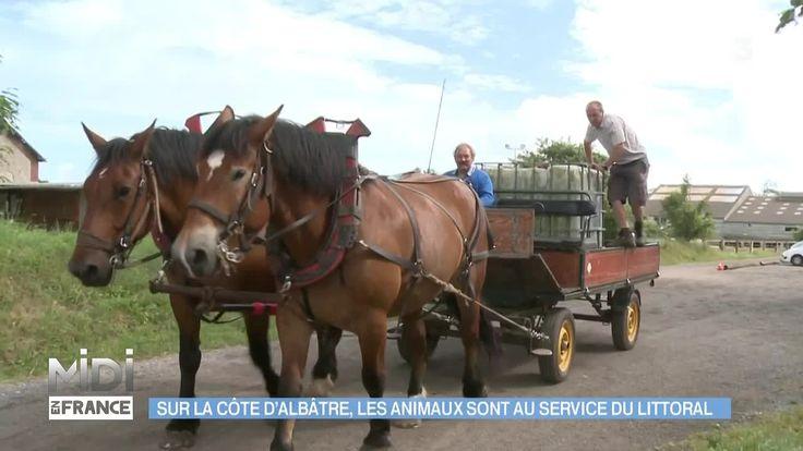 """Revoir en replay et en streaming """"ANIMAUX & NATURE : Sur la Côte d'Albâtre, les animaux sont au service du littoral"""" - Midi en France - France 3"""