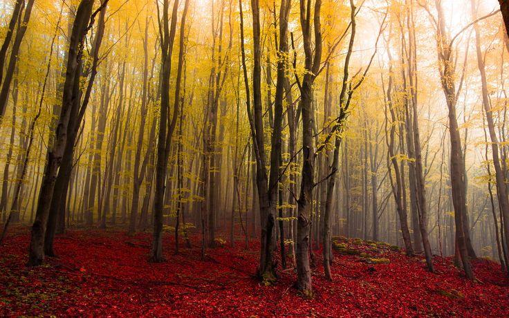 Fog by Mirko Fikentscher on 500px