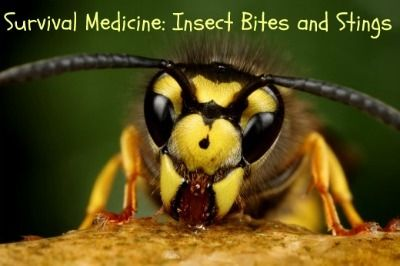 Survival Medicine: Insect Bites and Stings - Backdoor Survival