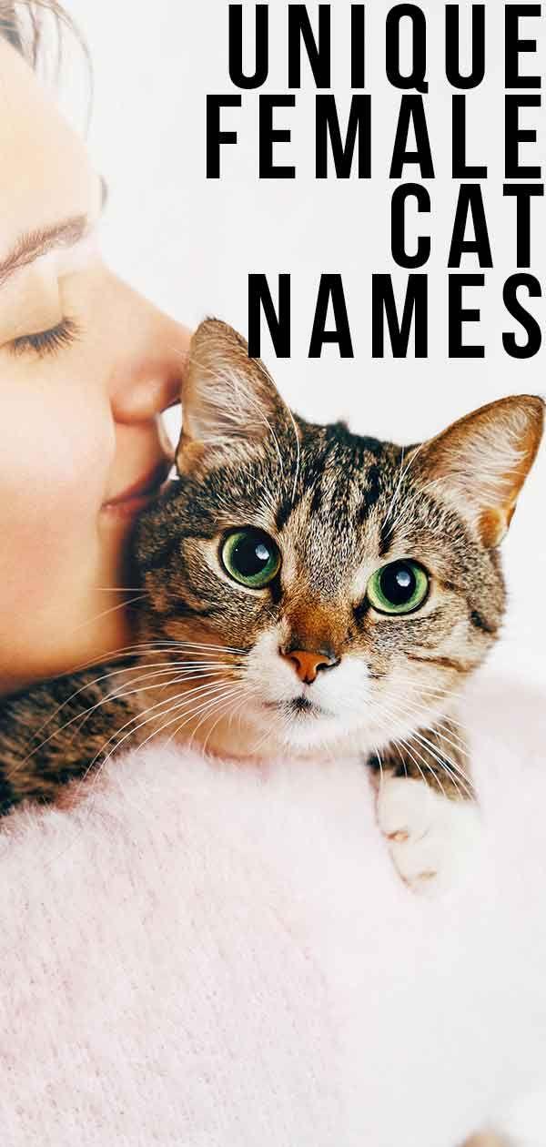 Unique Female Cat Names The Best Original Girl Kitty Names Cat Names Girl Cat Names Kitten Names Unique