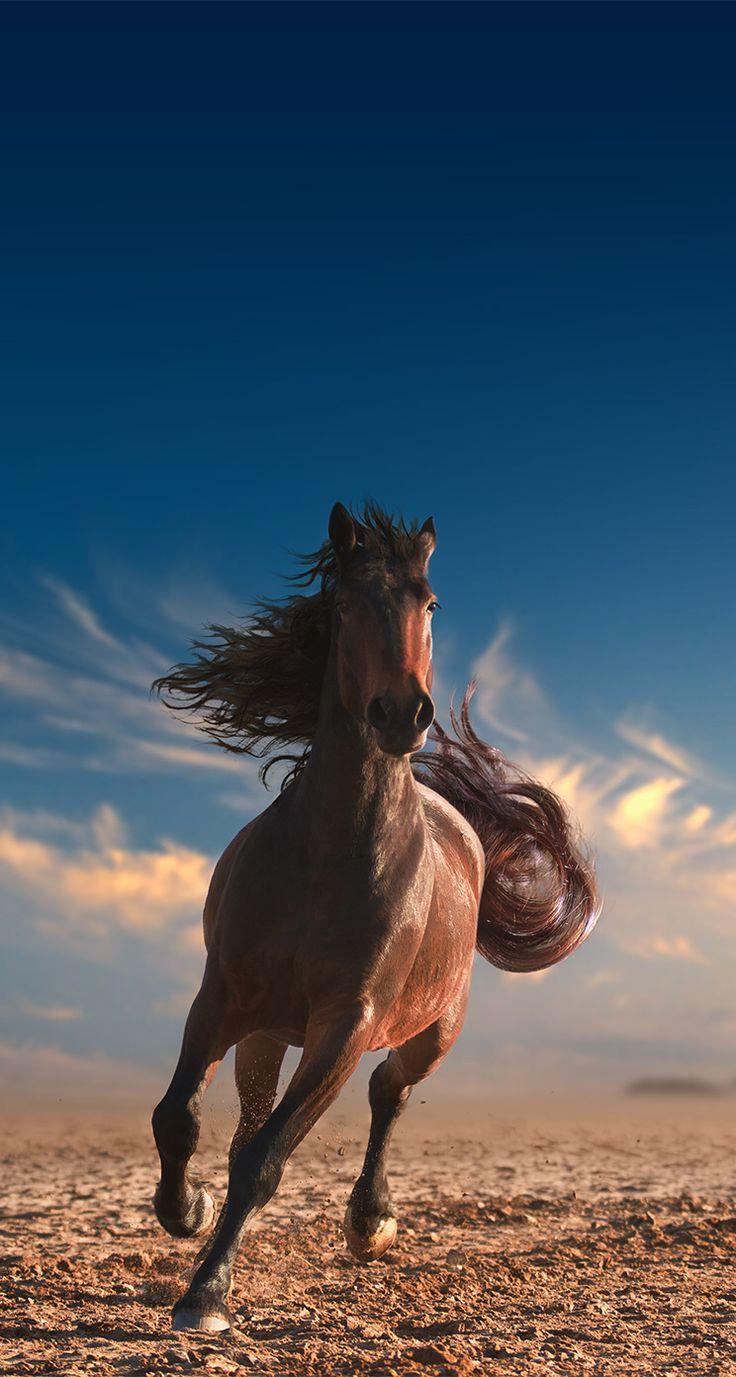 Wunderschönes Pferd ??❤