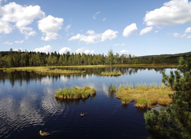 Chalupska Moor, Sumava National Park, Czech Republic