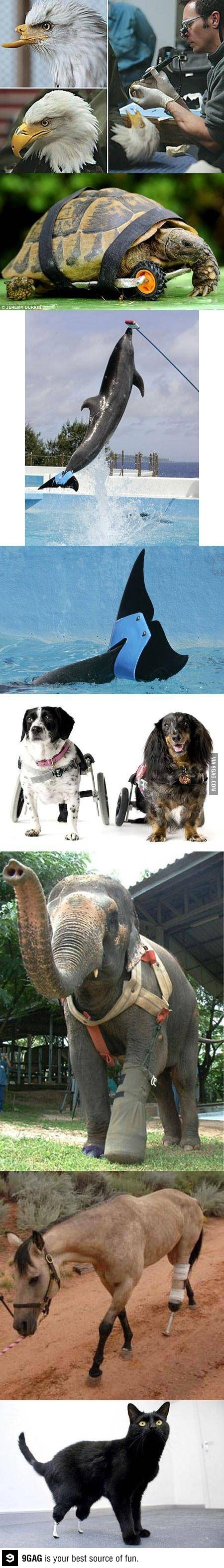 Animal prosthesis. It makes me sad and happy. However that works.