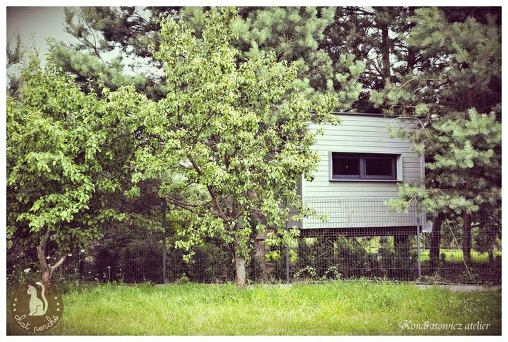 .tree house