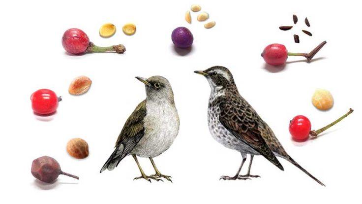 """東京ズーネット[公式]さんのツイート: """"実りの秋、鳥にとってもうれしい季節。 井の頭自然文化園の「花ごよみ」最新号は東京ズーネットで☞https://t.co/MvwPN8tygT https://t.co/l5Lng8xJr7"""""""
