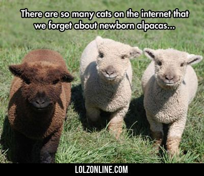 There Are So Many Cats On The Internet... #lol #haha #funny