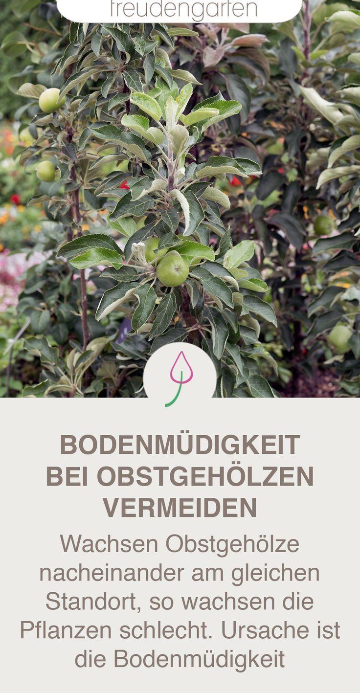 Beim Pflanzen Neuer Obstbaume Im Garten Auf Den Standort Achten Um Bodenmudig Plants Garden