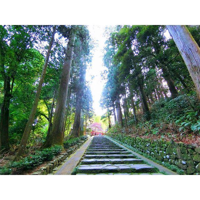 【erichunn54】さんのInstagramをピンしています。 《瑞鳳殿の参道☺️ 立派な杉並木が続いてたよ〜😊🌲 * #宮城#仙台#観光#観光地#観光スポット#瑞鳳殿#杉並木#参道#伊達政宗#るーぷる仙台#旅行#デジカメ#フォト#緑#森林#癒し #sendai#miyagi#japan#datemasamune#history#japanesehistory#travel#instamemories#l4l#instatravel》