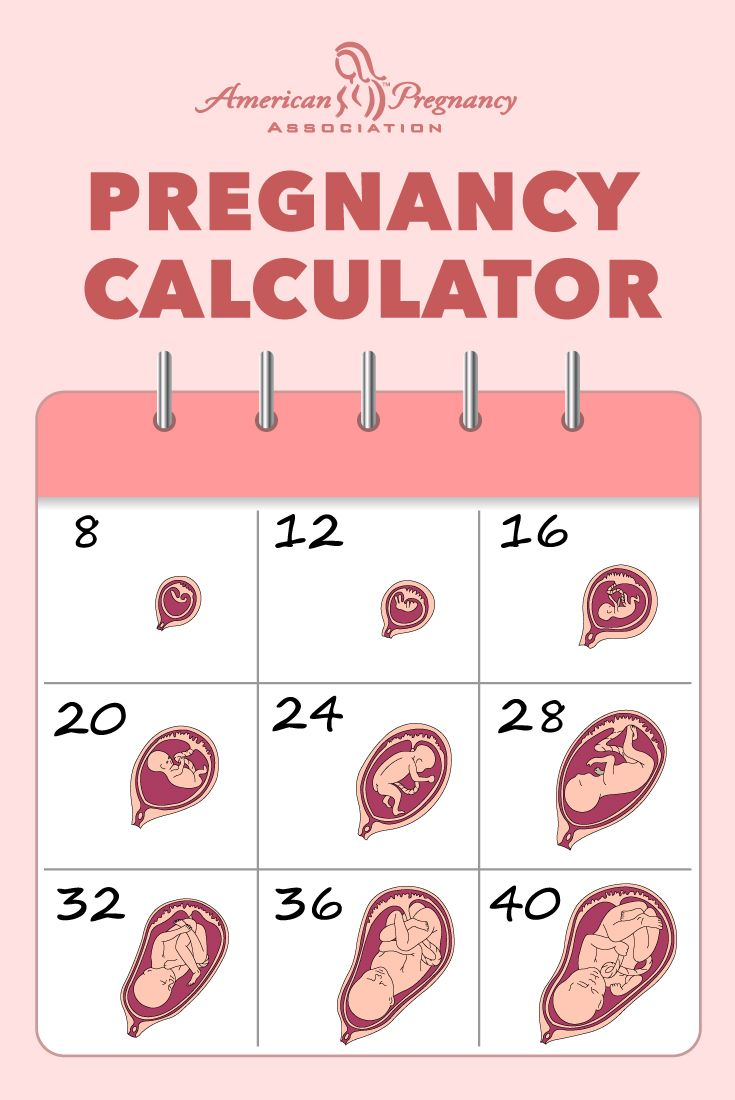 September year-old Calculate how many weeks pregnant you are