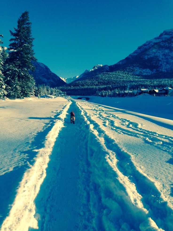 Bella walking the trail in Canmore