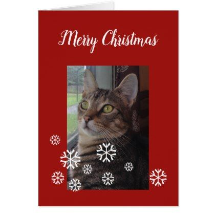 Tabby Cat Christmas Personalize Greeting Card - Xmascards ChristmasEve Christmas Eve Christmas merry xmas family holy kids gifts holidays Santa cards