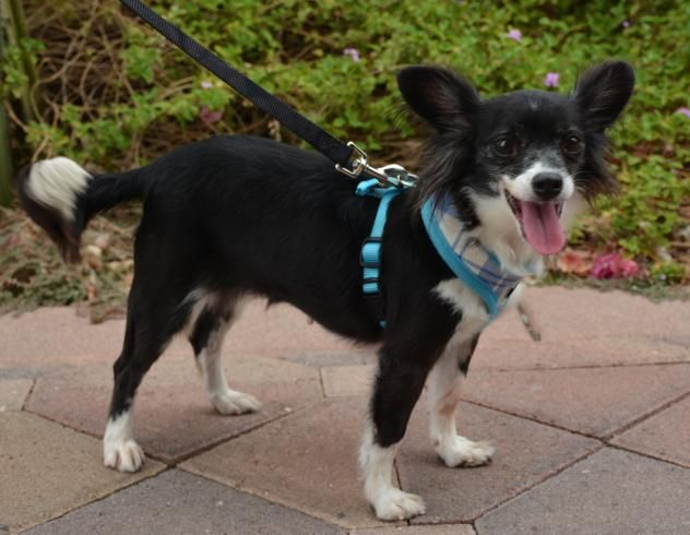 Mutts And Stuff Small Dog Rescue
