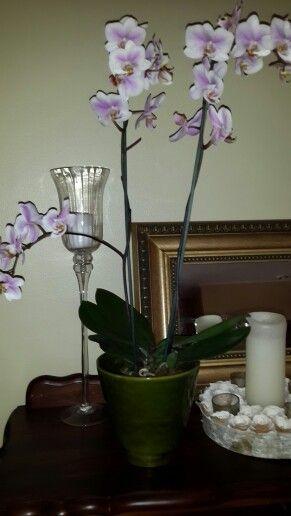 Orchids ...  Ans ..  Melissa