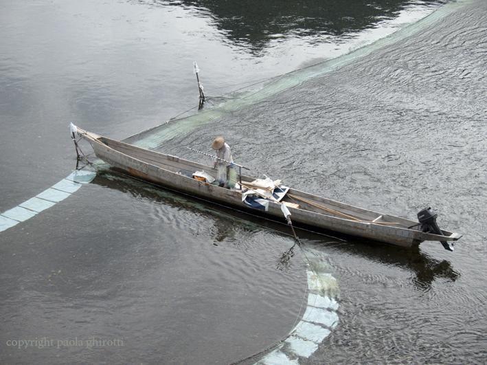 primo aprile i pesci abboccano anche sul nagaragawa