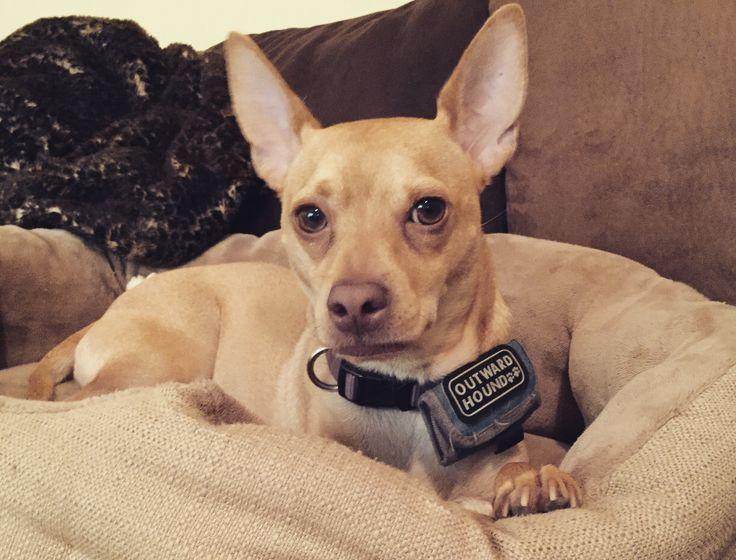 Dog Adoption Livermore Ca