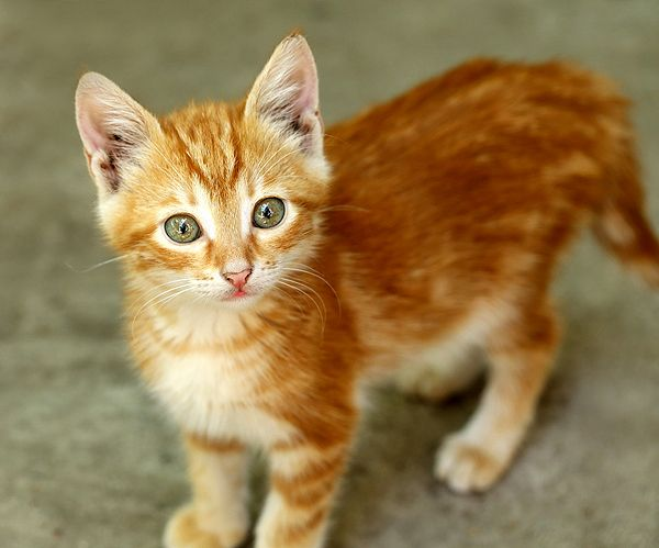I Loved My First Cat, and I Lost Him Due to a Careless Accident