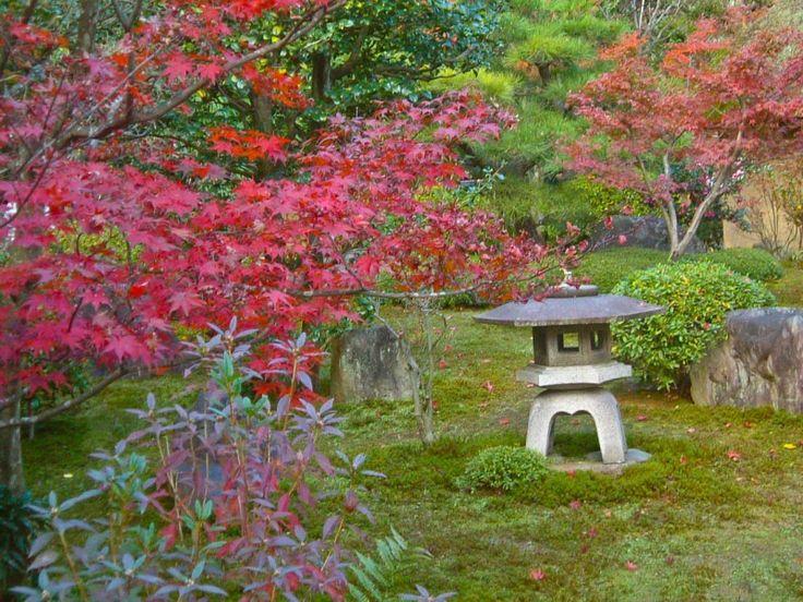 koyo o momiji cambio de color de las hojas en japón