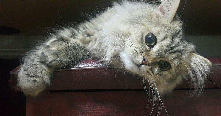 No permitas que la gripe felina se vuelva viral: ¡protege a tu gato!