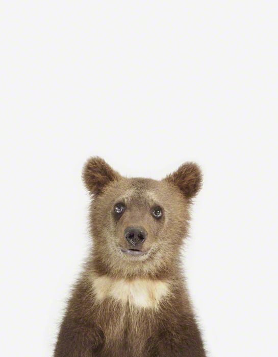 If you love charming animal photography, you probably have already heard of Sharon Montrose. Known for her quintessential unique style that captures the si