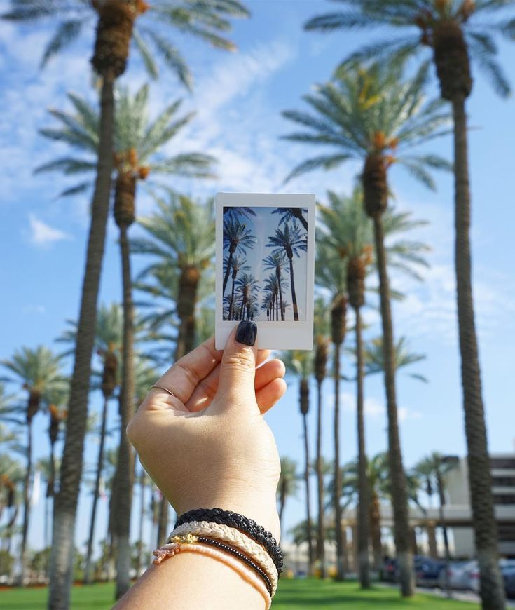 Palm trees and polaroids x @shannondidwhat