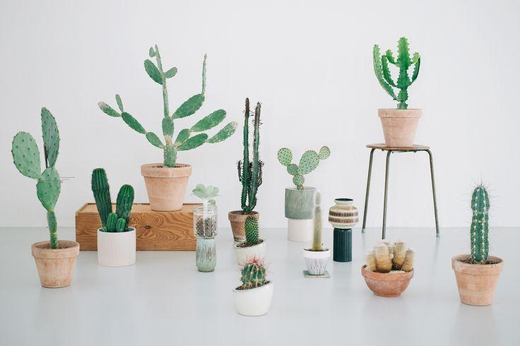 kaktus - Google Search